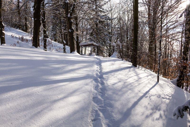 Πανόραμα του χειμερινού δάσους με καλυμμένο το δέντρα χιόνι στοκ εικόνες