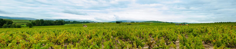 Πανόραμα του Beaujolais τοπίου, Γαλλία στοκ φωτογραφίες με δικαίωμα ελεύθερης χρήσης