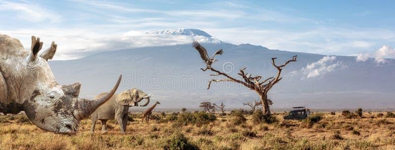 Πανό Web για Αφρικανικά Ζώα Που Απειλούνται στοκ εικόνα