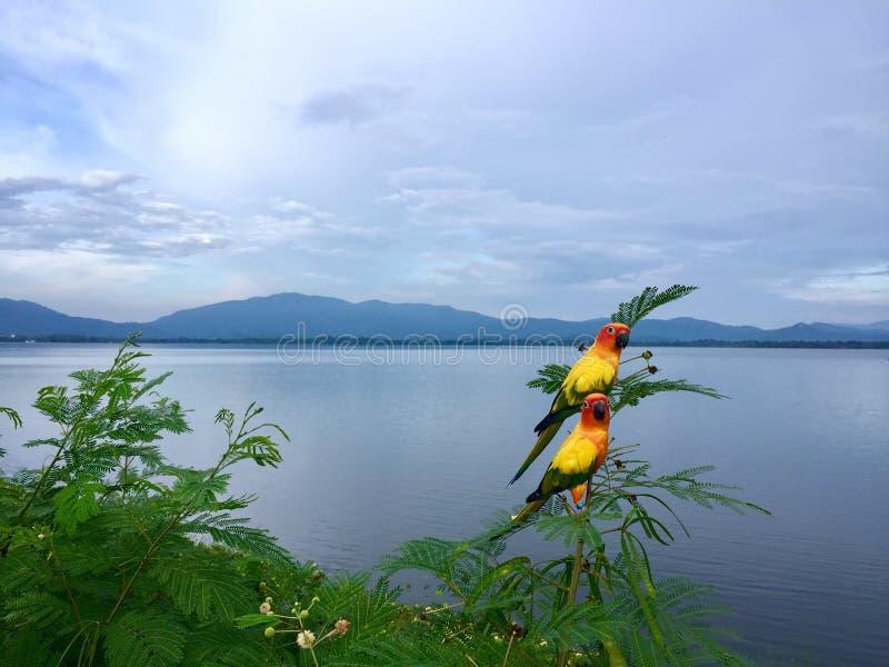 Παπαγάλοι στη φύση στην κορυφογραμμή στο φράγμα Chonburi, Ταϊλάνδη στοκ εικόνα με δικαίωμα ελεύθερης χρήσης