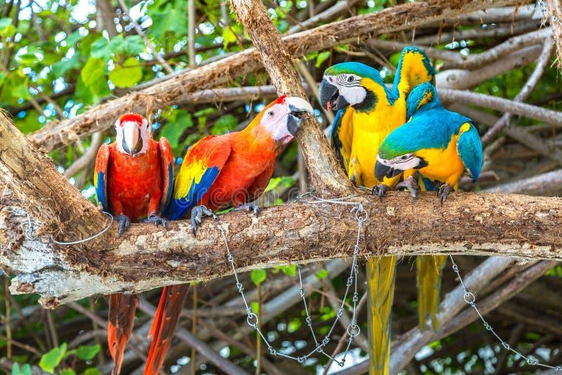 Παπαγάλοι Macaw στον κλάδο δέντρων στοκ εικόνες