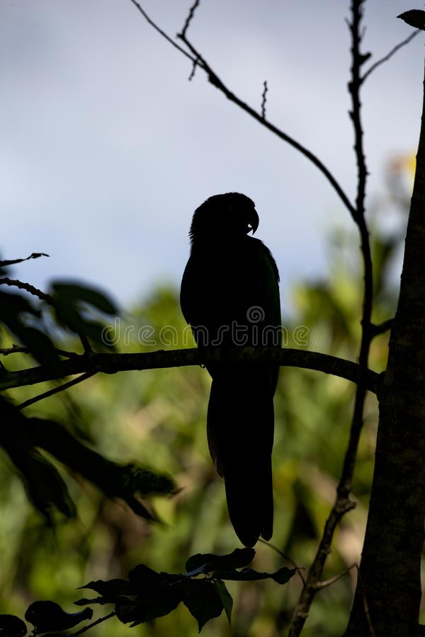 Παπαγάλος σκιαγραφιών στοκ φωτογραφία