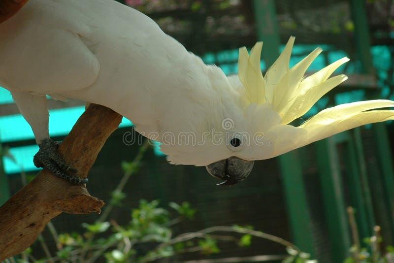 Download παπαγάλος στοκ εικόνα. εικόνα από birdbaths, φτερά, ταξίδι - 114269