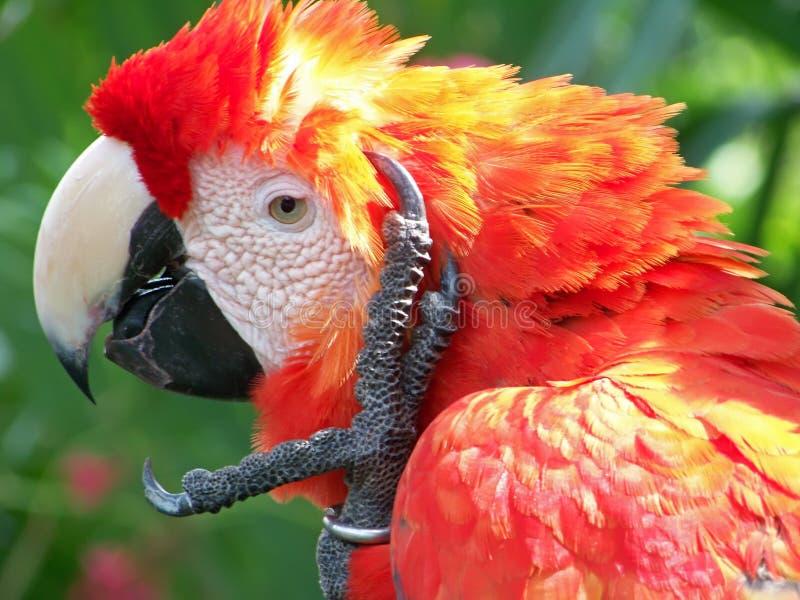 παπαγάλος 4 στοκ εικόνες