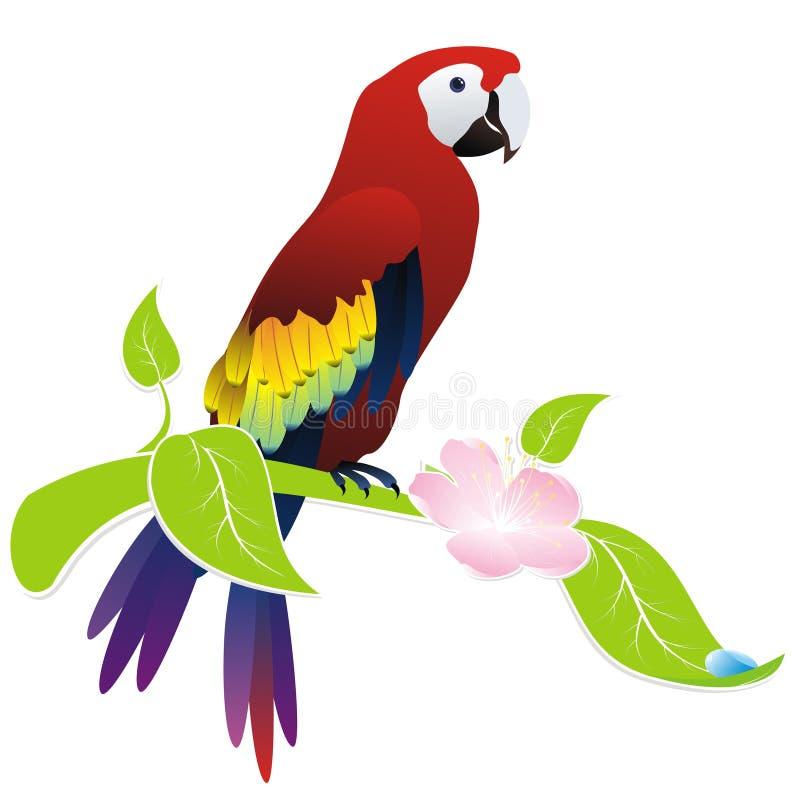 παπαγάλος ara ελεύθερη απεικόνιση δικαιώματος