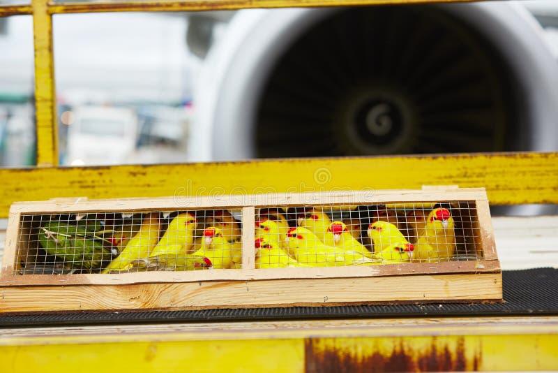 Παπαγάλοι για την πώληση στοκ φωτογραφία με δικαίωμα ελεύθερης χρήσης