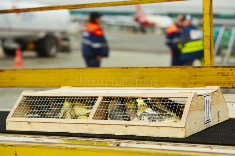 Παπαγάλοι για την πώληση στοκ εικόνα με δικαίωμα ελεύθερης χρήσης