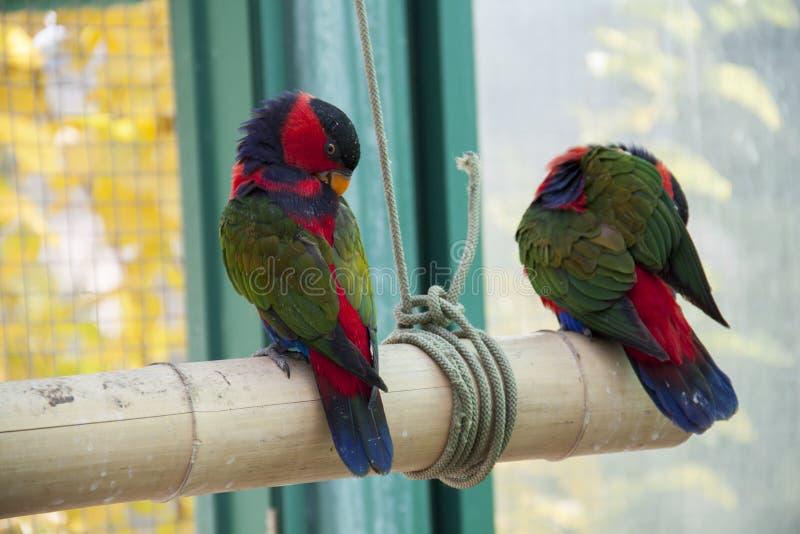 παπαγάλοι δύο στοκ εικόνα με δικαίωμα ελεύθερης χρήσης