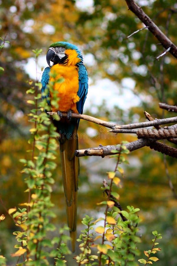 παπαγάλος πάρκων της Ινδονησίας κλάδων πουλιών του Μπαλί στοκ φωτογραφίες