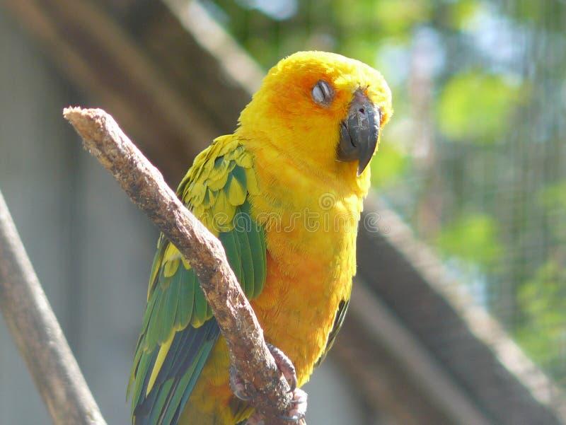 Παπαγάλος που απολαμβάνει τον ήλιο στοκ φωτογραφία
