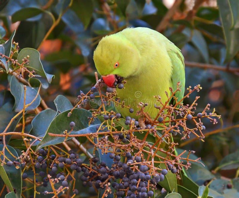Παπαγάλος στο τροπικό δάσος στοκ φωτογραφίες με δικαίωμα ελεύθερης χρήσης