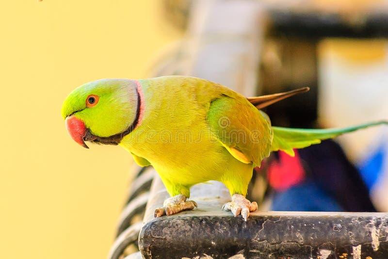 Παπαγάλος στο φως πρωινού στοκ εικόνες