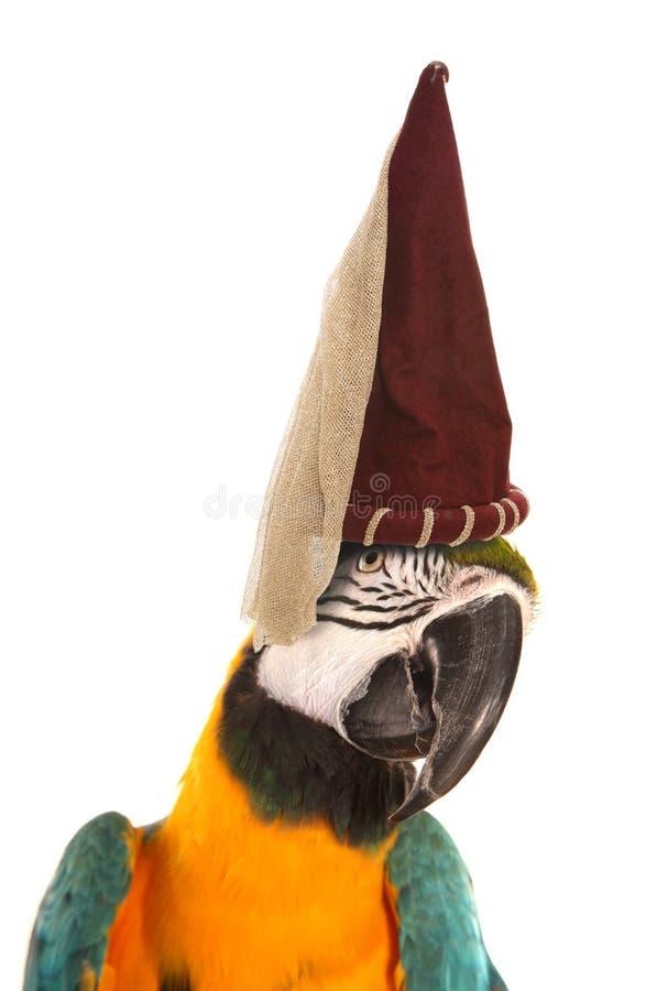 Παπαγάλος Macaw που φορά ένα καπέλο πριγκηπισσών στοκ εικόνα με δικαίωμα ελεύθερης χρήσης