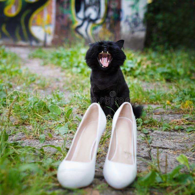 Παπούτσια γατών και των γυναικών χασμουρητού στοκ φωτογραφία με δικαίωμα ελεύθερης χρήσης