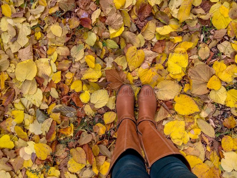 Παπούτσια γυναικών πιπεροριζών με τα κίτρινα πεσμένα φύλλα στοκ φωτογραφίες με δικαίωμα ελεύθερης χρήσης