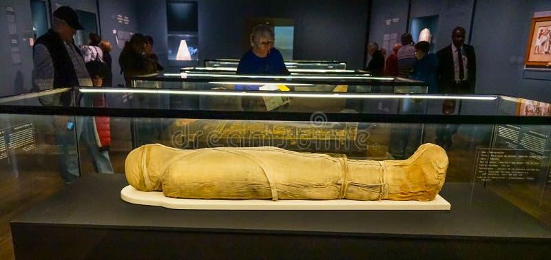 Παράδειγμα αιγυπτιακής μούμιας στο MBAM στοκ φωτογραφία