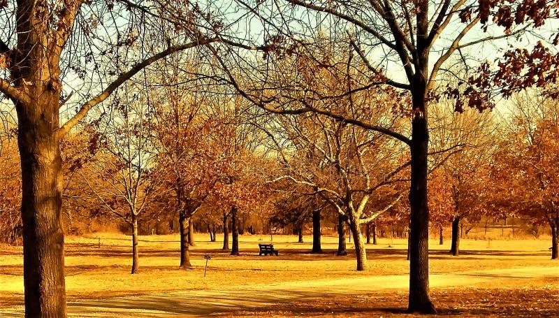 Παράδεισος δέντρων στοκ εικόνα
