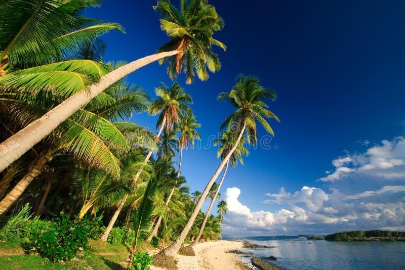 παράδεισος παραλιών τροπ στοκ εικόνα με δικαίωμα ελεύθερης χρήσης