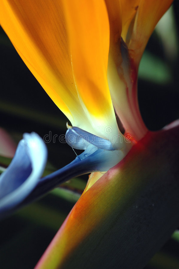 Download παράδεισος στοκ εικόνες. εικόνα από κήπος, παράδεισος, βακκινίων - 115336