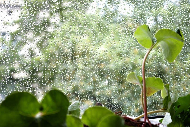 παράθυρο βροχής στοκ εικόνες