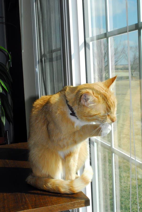 παράθυρο γατών στοκ φωτογραφίες με δικαίωμα ελεύθερης χρήσης