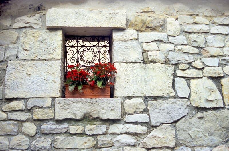 παράθυρο κιβωτίων kalanchoe στοκ φωτογραφία με δικαίωμα ελεύθερης χρήσης