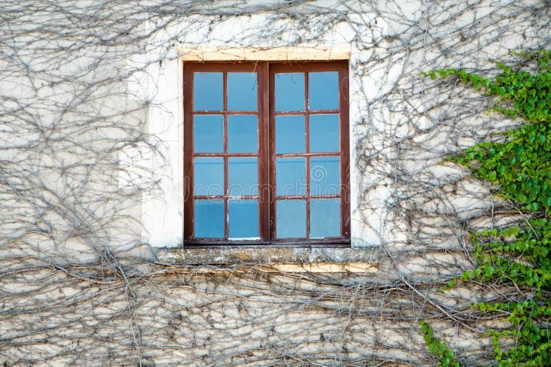 παράθυρο στον υπαίθριο τοίχο του σπιτιού που εισβάλλεται από τον κισσό στοκ φωτογραφία με δικαίωμα ελεύθερης χρήσης