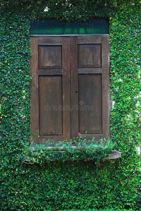 παράθυρο τοίχων πράσινων φ&upsil στοκ εικόνες με δικαίωμα ελεύθερης χρήσης
