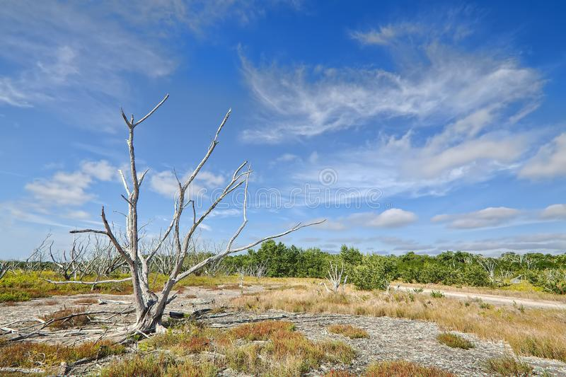 παράκτια λιβάδια everglades στοκ εικόνα με δικαίωμα ελεύθερης χρήσης