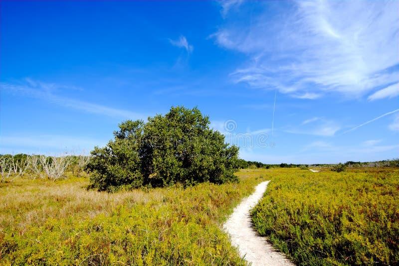 παράκτια λιβάδια everglades στοκ φωτογραφίες με δικαίωμα ελεύθερης χρήσης