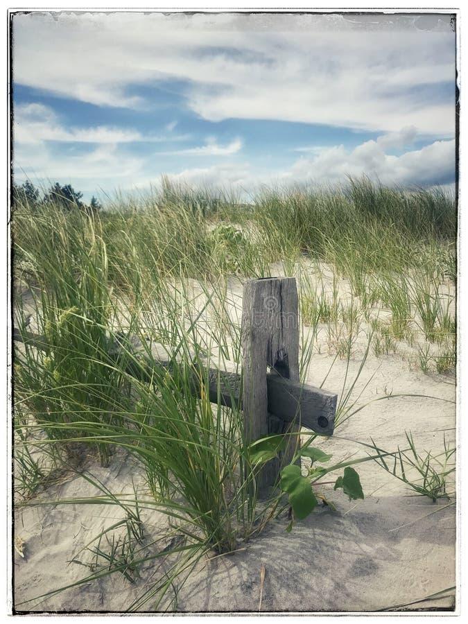 Παράκτια σκηνή αμμόλοφων στοκ φωτογραφίες