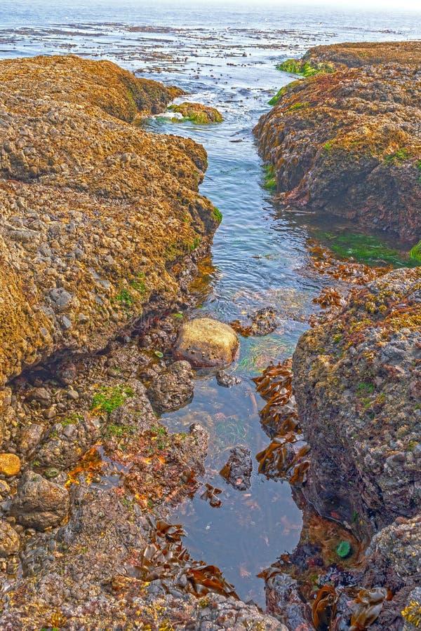 Παράκτιοι βράχοι at Low Tide στοκ εικόνα