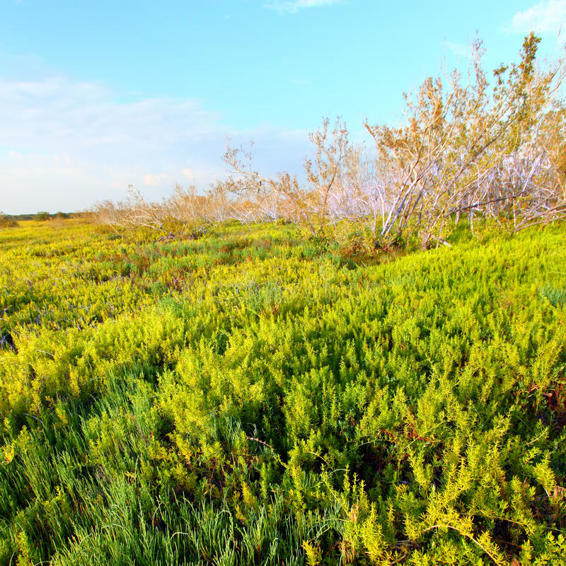 Παράκτιο τοπίο Everglades λιβαδιών στοκ φωτογραφία με δικαίωμα ελεύθερης χρήσης