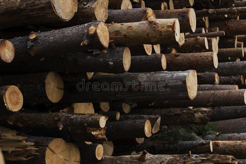 Παράνομη κατάρριψη των δέντρων στη δασική έννοια οικολογίας στοκ φωτογραφία με δικαίωμα ελεύθερης χρήσης