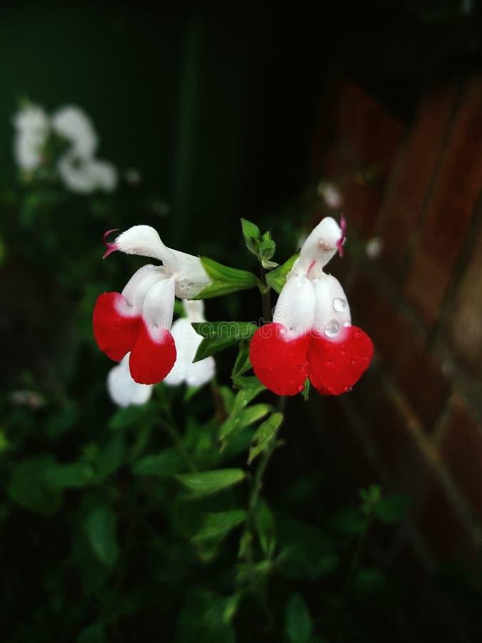 Παράξενα λουλούδια στοκ φωτογραφία με δικαίωμα ελεύθερης χρήσης