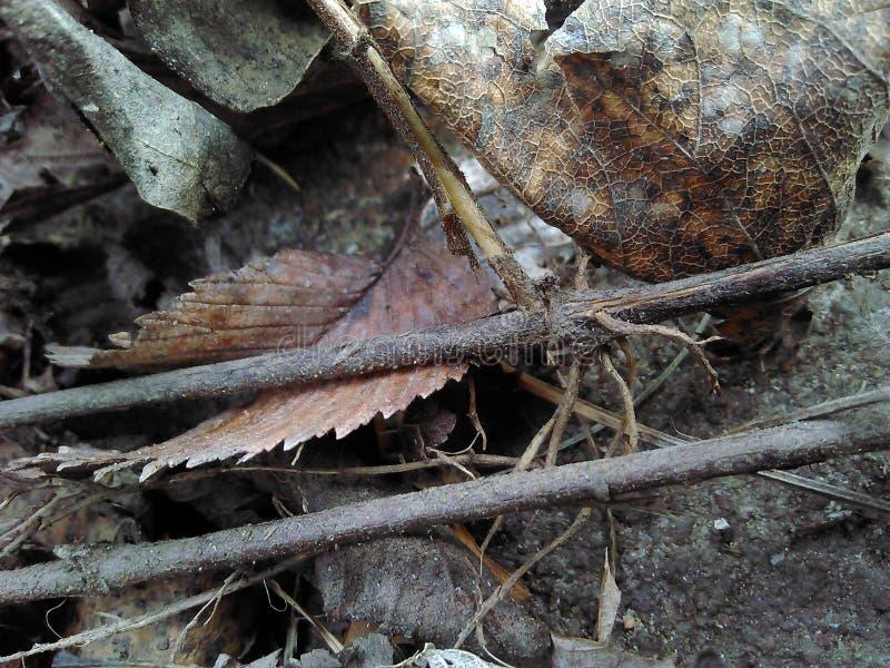 Παράλληλα ραβδιά δίπλα στα αποσυντιθειμένος φύλλα στοκ εικόνες με δικαίωμα ελεύθερης χρήσης