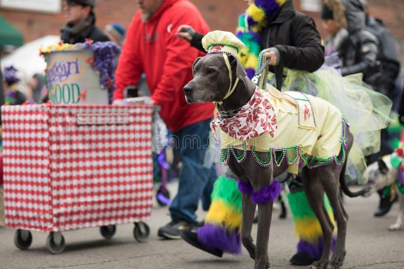 Παρέλαση της Pet Beggin' στοκ εικόνα με δικαίωμα ελεύθερης χρήσης