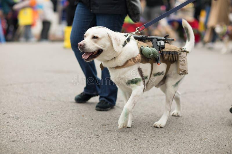 Παρέλαση της Pet Beggin' στοκ εικόνες