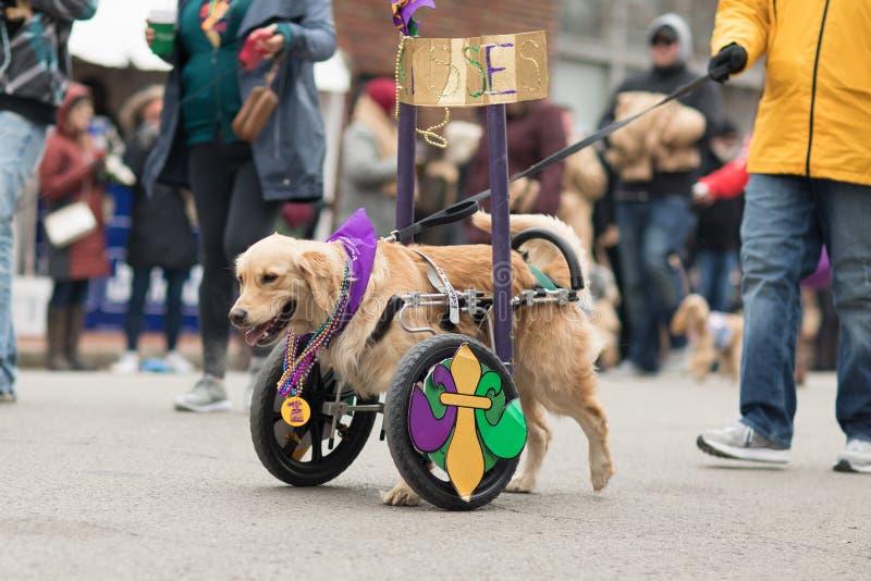 Παρέλαση της Pet Beggin' στοκ φωτογραφία με δικαίωμα ελεύθερης χρήσης