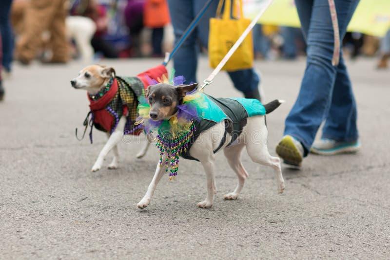Παρέλαση της Pet Beggin' στοκ φωτογραφίες