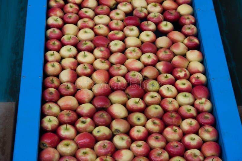 παραγωγή μήλων στοκ φωτογραφία με δικαίωμα ελεύθερης χρήσης