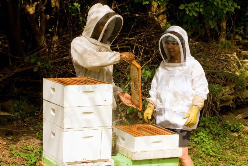 Παραγωγή μελιού στις Καραϊβικές Θάλασσες στοκ εικόνες με δικαίωμα ελεύθερης χρήσης