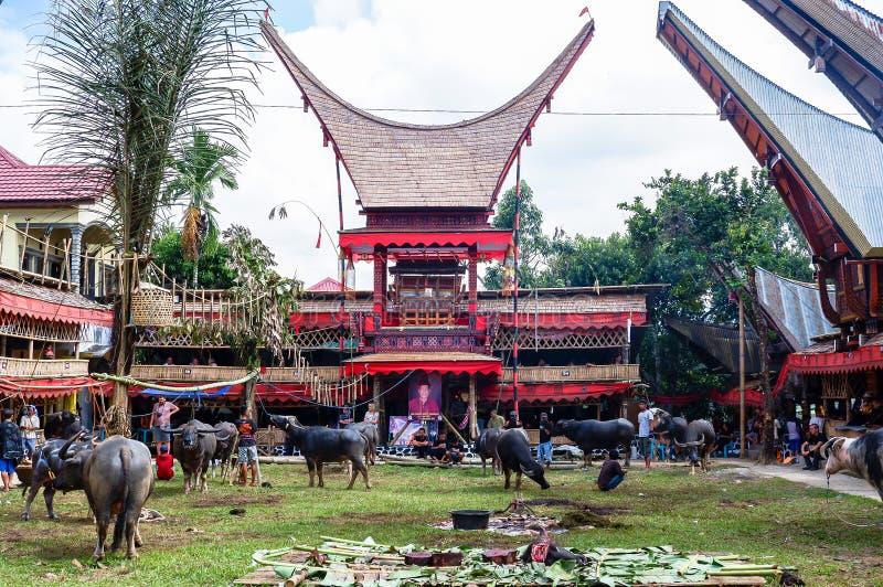 Παραδοσιακά φεστιβάλ Torajan σε Sulawesi στοκ εικόνες με δικαίωμα ελεύθερης χρήσης