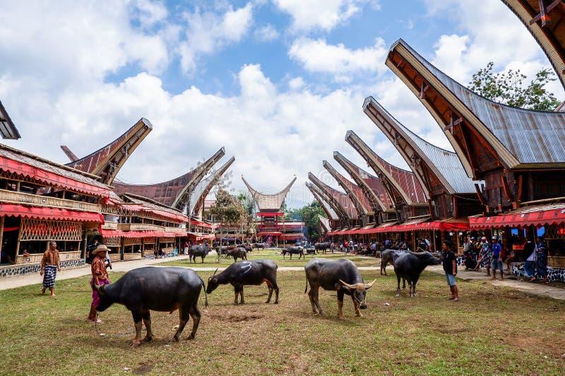 Παραδοσιακά φεστιβάλ Torajan σε Sulawesi στοκ φωτογραφίες με δικαίωμα ελεύθερης χρήσης