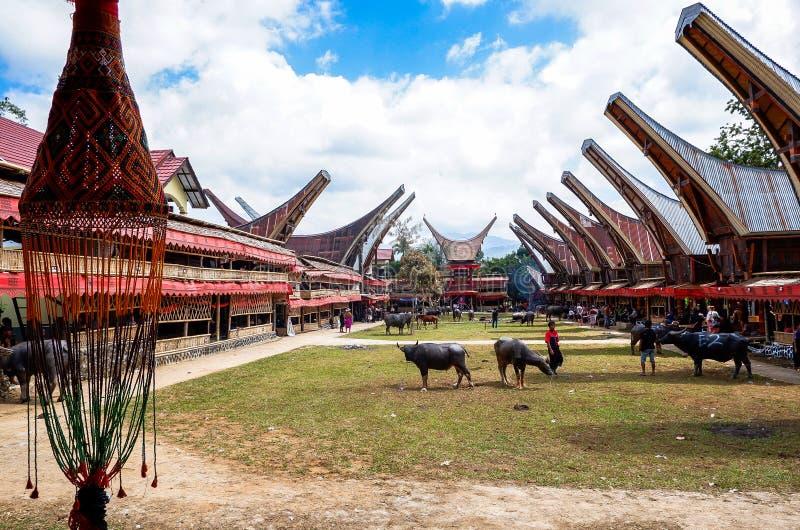 Παραδοσιακά φεστιβάλ Torajan σε Sulawesi στοκ εικόνες