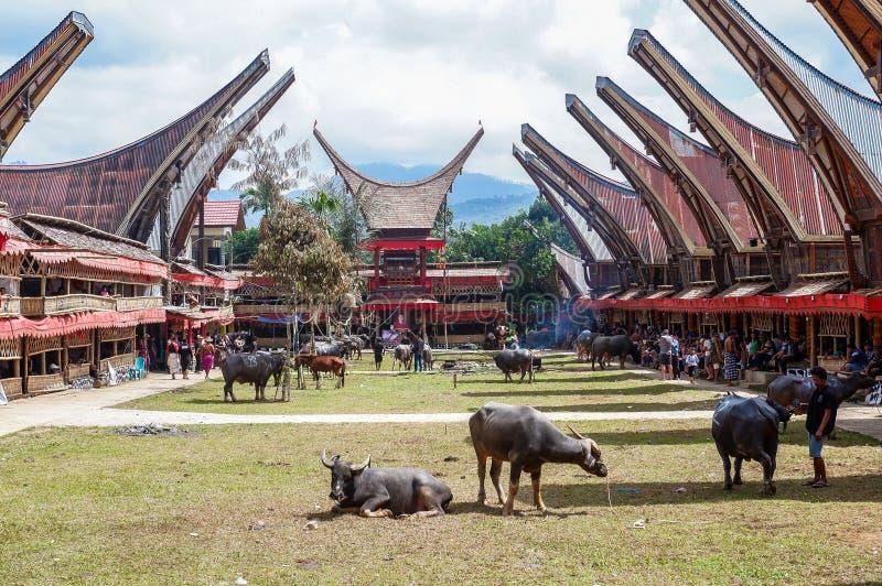 Παραδοσιακά φεστιβάλ Torajan σε Sulawesi στοκ εικόνα με δικαίωμα ελεύθερης χρήσης
