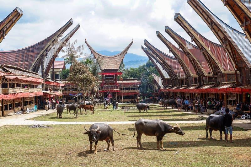 Παραδοσιακά φεστιβάλ Torajan σε Sulawesi στοκ εικόνα