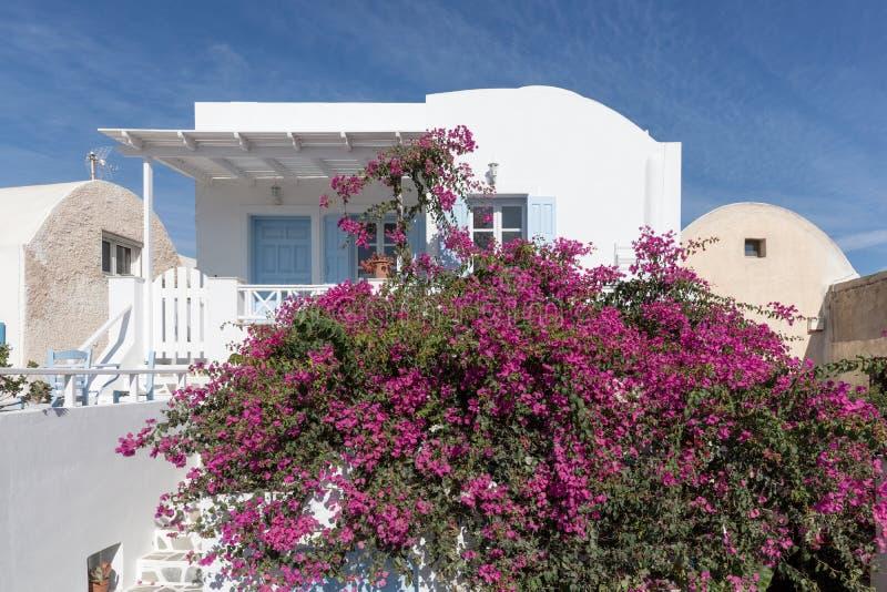 Παραδοσιακή ελληνική αρχιτεκτονική και ρόδινα λουλούδια στην πόλη Oia στοκ φωτογραφία με δικαίωμα ελεύθερης χρήσης