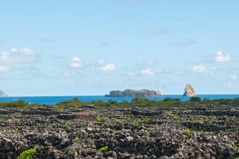 """Παραδοσιακοί αμπελώνες στο νησί Pico, Αζόρες Οι αμπελώνες είναι μεταξύ των τοίχων πετρών, αποκαλούμενος """"αμπελώνα συγκεντρώνει """" στοκ φωτογραφία με δικαίωμα ελεύθερης χρήσης"""