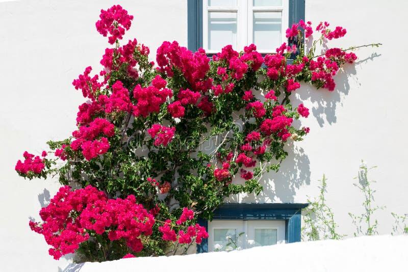 Παραδοσιακό άσπρο και μπλε σπίτι της Ελλάδας με τα λουλούδια στοκ εικόνα με δικαίωμα ελεύθερης χρήσης